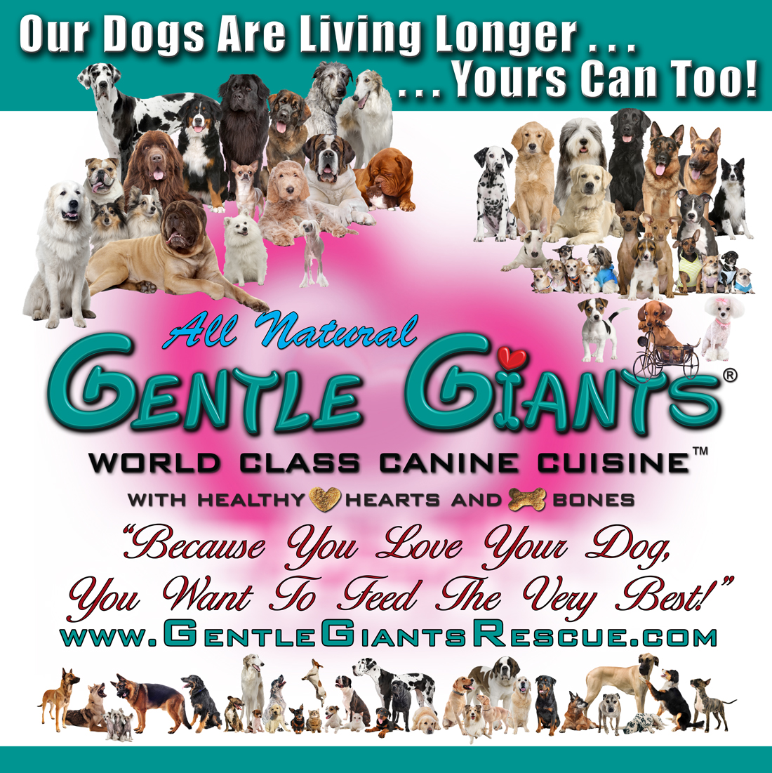 Gentle Giants Banner